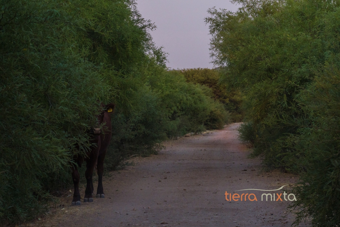 Presidios Durango - Tepehuanes - Tierra Mixta - Los pueblos del tren - Cristian Herrera (3)